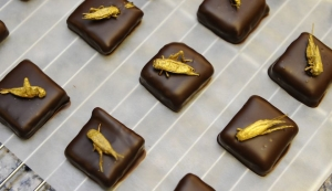 Gold-coated crickets sit on chocolates. Photograph by Jean-Christophe Verhaegen — AFP/Getty Images